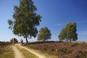 Germany, Lower Saxony, LŸneburg Heath, Heath Path, Cyclists by Chris Seba