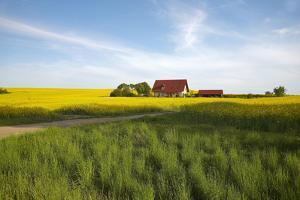 Germany, Mecklenburg-Western Pomerania, Island Usedom, Rape Field, House by Chris Seba