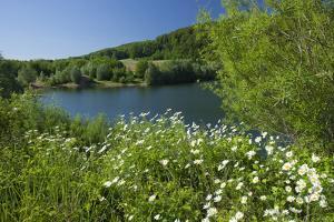Germany, Weser Hills, Lower Saxony, Heinsen, Lake, Bath Bay, Shore, Marguerites by Chris Seba