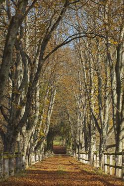 Luxembourg, Ansembourg Castle, Path, Avenue, Autumn Foliage by Chris Seba