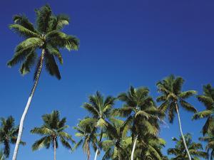 Coconut Grove by Chris Simpson