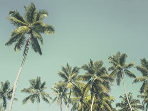 Palm Grove by Chris Simpson