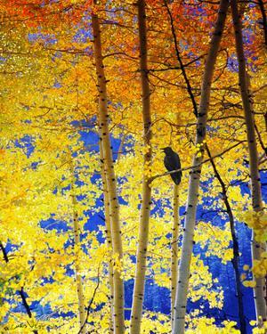 Autumn Raven by Chris Vest