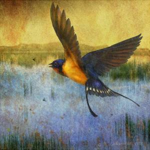 Barnswallow by Chris Vest