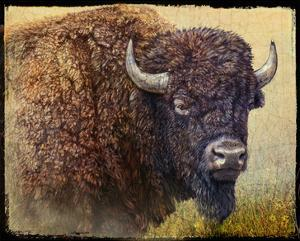 Bison Facing Right by Chris Vest