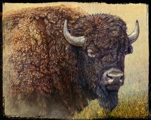 Bison Portrait I by Chris Vest
