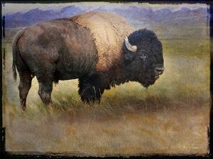 Bison Portrait II by Chris Vest
