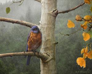 Bluebird Rain by Chris Vest