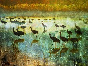 Cranes in Mist I by Chris Vest