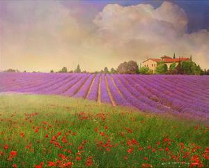 Lavender Fields II by Chris Vest