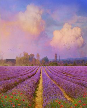 Lavender I by Chris Vest