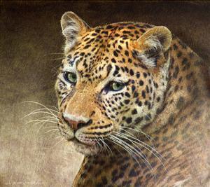 Leopard by Chris Vest