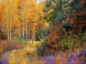 Lost Canyon Larkspurs I by Chris Vest