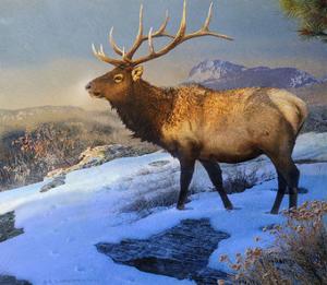 Mountain Elk II by Chris Vest