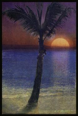 Palm Variation II by Chris Vest