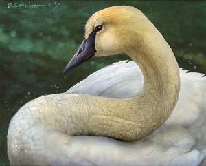 Swan by Chris Vest