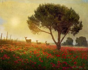 Trees, Poppies and Deer I by Chris Vest