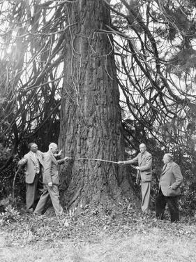 Measuring A Redwood by Chris Ware