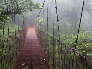 Cost Rica Monteverde Eco Tourism Canopy Walkway in Cloudfores by Christer Fredriksson