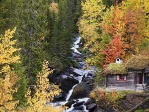 Forest of Birches and Aspens in Autumn by Brook with Traditional Wooden Forest Hut by Christer Fredriksson