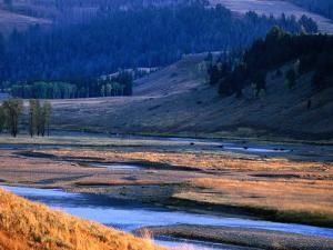 Lamar River Valley with Bison Crossing in Distance, Yellowstone National Park, U.S.A. by Christer Fredriksson