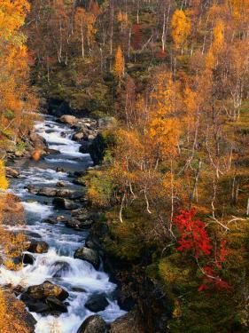 Mountain Stream in Autumn, Vindelfjallen Nature Reserve, Sweden by Christer Fredriksson