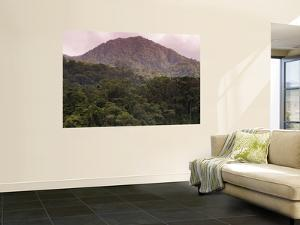 Rainforest on Mountain Slopes by Christer Fredriksson