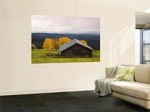 Traditional Wooden Barn, Yellow Aspens and Fjells with First Snow in Autumn by Christer Fredriksson