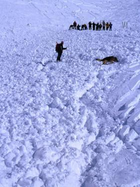 Aftermath of Avalanche with Rescue Party, Dog and Handler Searching for the Missing, Austria by Christian Aslund