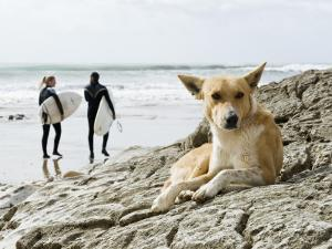 Dog Resting and Surfers Walking Along Beach at Anchor Point by Christian Aslund