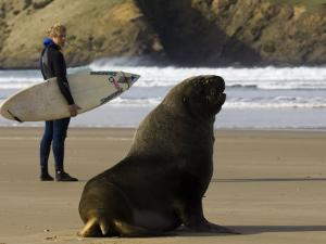 Surfer Standing Near Sea Lion on Beach, the Catlins, Porpoise Bay, New Zealand by Christian Aslund