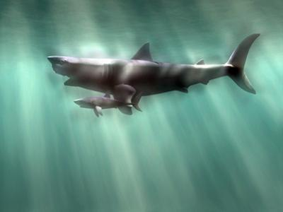 Megalodon Shark And Great White by Christian Darkin