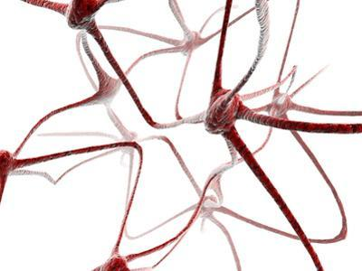 Nerve Cells by Christian Darkin