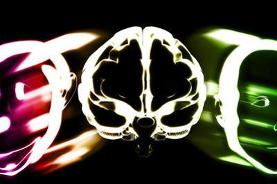 Primate Brain Evolution by Christian Darkin