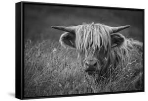Europe, United Kingdom, Scotland,Hebrides archipelago, Isle of Skye, Bos taurus, Highland cattle by Christian Heeb