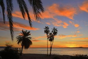 Palm Trees at Sunset in La Ventana, Baja California Sur, Mexico, by Christian Heeb