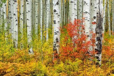 USA, Colorado, Aspen along McClure Pass in the Colorado Rockies