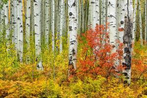USA, Colorado, Aspen along McClure Pass in the Colorado Rockies by Christian Heeb
