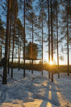 Arctic Circle, Lapland, Scandinavia, Sweden, the Tree Hotel, the Mirror Cube Room by Christian Kober