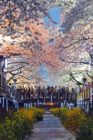 Asia, Republic of Korea, South Korea, Jinhei, Spring Cherry Blossom Festival by Christian Kober
