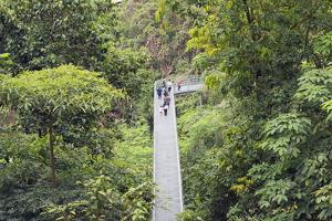 Canopy Walk, Southern Ridges, Singapore, Southeast Asia, Asia by Christian Kober