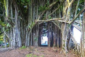 Hilo, Big Island, Hawaii, USA by Christian Kober