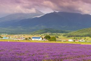 Lavender fields, Furano, Hokkaido, Japan by Christian Kober
