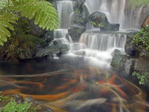 Longshan Temple Waterfall with Swimming Koi Fish, Taiwan by Christian Kober