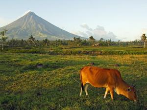 Luzon Island, Bicol Province, Mount Mayon Volcano, Philippines by Christian Kober