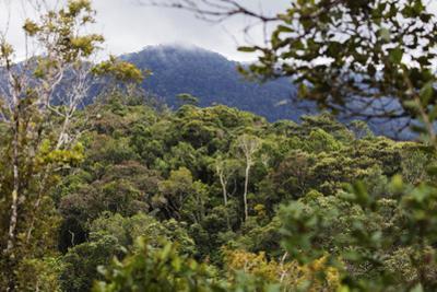 Ranomafana National Park, central area, Madagascar, Africa by Christian Kober
