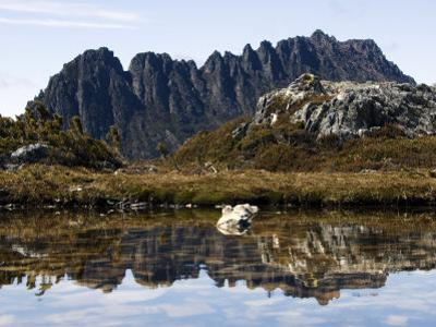 Reflected in Tarn on 'Cradle Mountain - Lake St Clair National Park', Tasmania, Australia by Christian Kober
