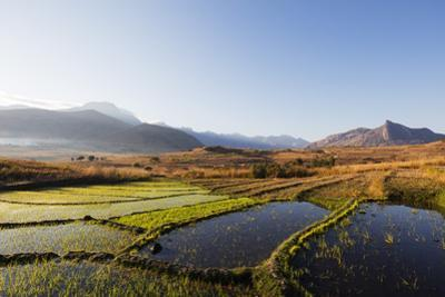 Rice cultivation, Tsaranoro Valley, Ambalavao, central area, Madagascar, Africa by Christian Kober
