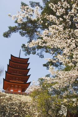 Spring Cherry Blossom at Senjokaku Five Storey Pagoda by Christian Kober