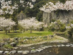 Spring Cherry Blossoms Near River with Stepping Stones, Kagoshima Prefecture, Kyushu, Japan by Christian Kober